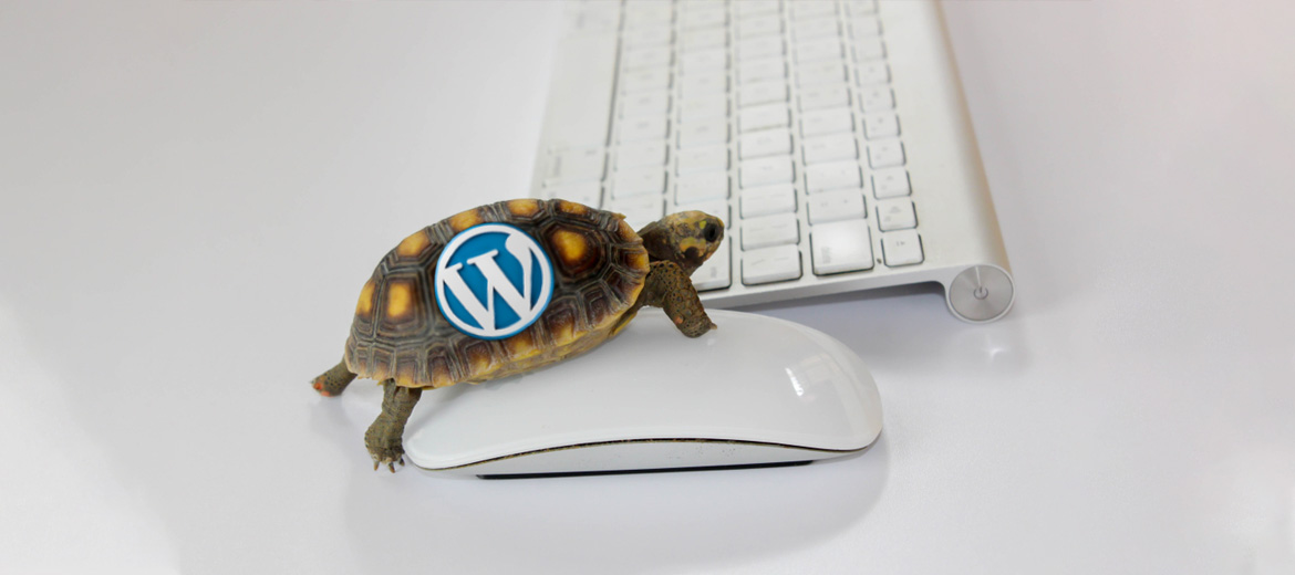 10 Reasons Why Your WordPress Website Is Slowing Down